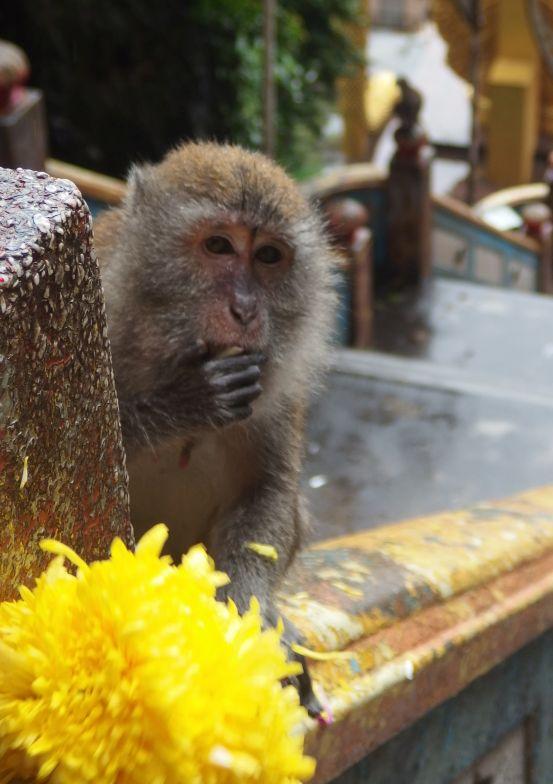 Byliśmy niemal tak zdziwieni jak ta małpka jedząca kwiatka