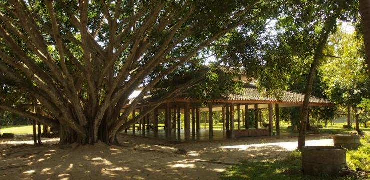 Życie ascety, czyli 10 dni medytacji w Suan Mokkh – część I