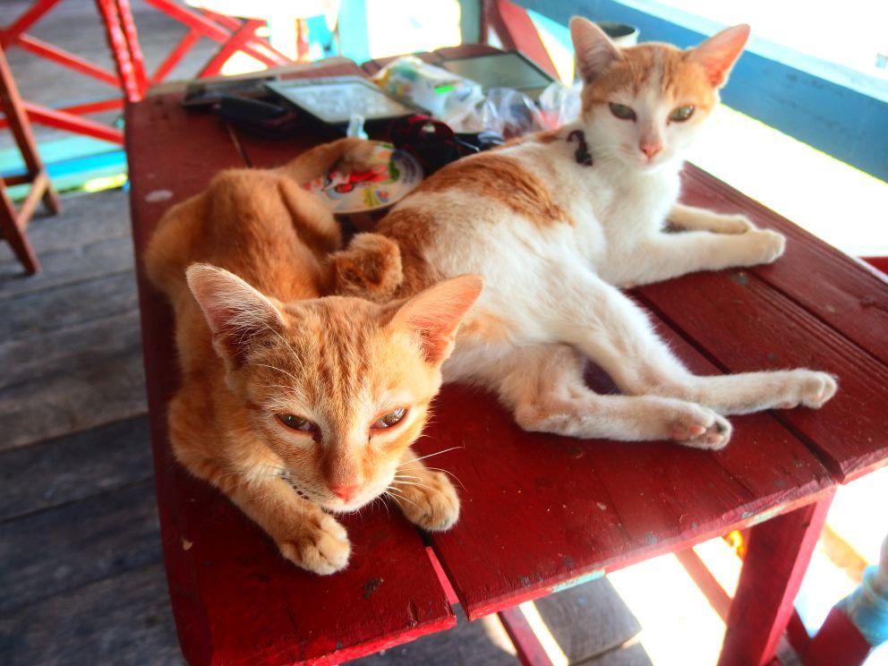 Nie mam zdjęć z podróży więc wrzucam koty!