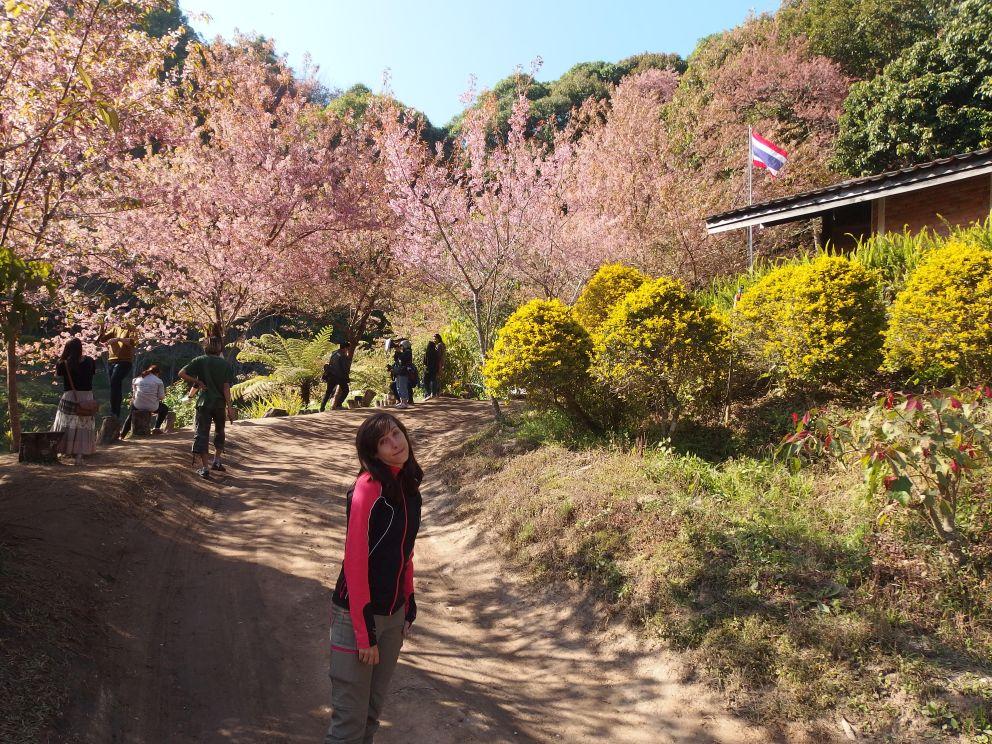 Kwitnąca Marta w otoczeniu kwitnących wiśni